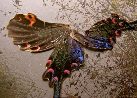 Wings and pond